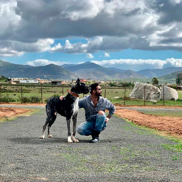 Pug en Hotel Valle de Guadalupe